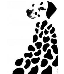Poster Dalmatian Anatology Poster Dalmatian
